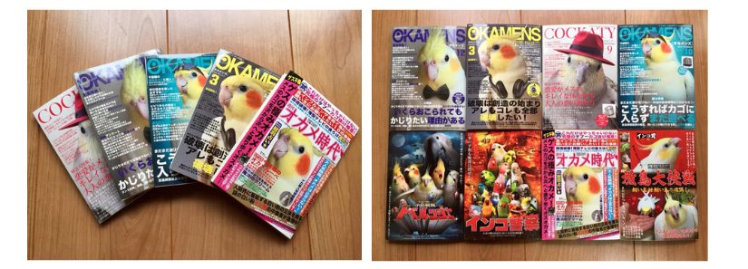 Parrot magazines transformed into notepads