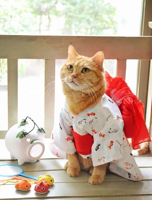 Японцы - любители котов