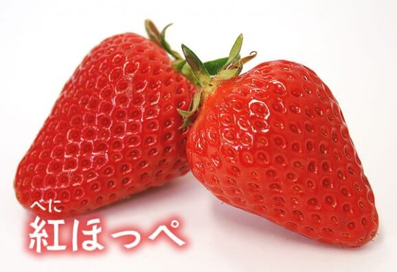 Japanese Strawberry Varieties - Beni-Hoppe