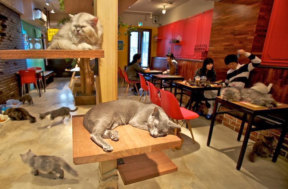Нэко-кафе в Японии