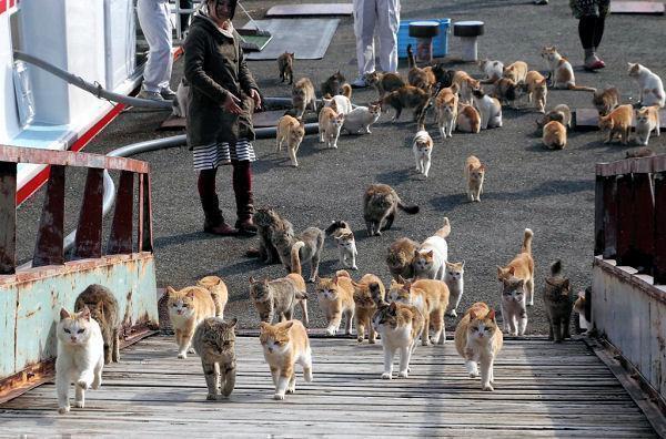 Японский остров котов